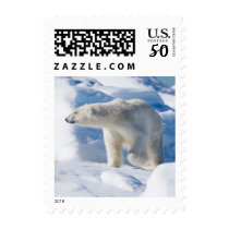 Young Male Polar Bear Postage