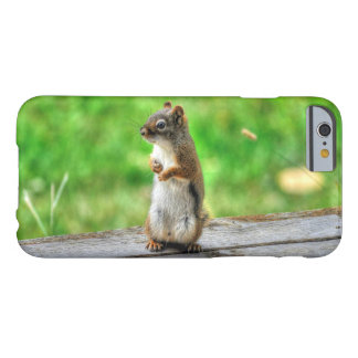 Young Male Squirrel Standing Wildlife Photo Barely There iPhone 6 Case