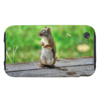 Young Male Squirrel Standing Wildlife Photo Tough iPhone 3 Cases