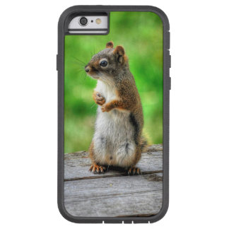 Young Male Squirrel Standing Wildlife Photo iPhone 6 Case