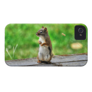 Young Male Squirrel Standing Wildlife Photo Case-Mate iPhone 4 Case