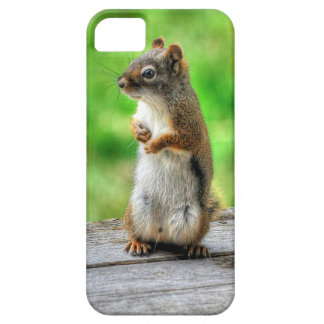 Young Male Squirrel Standing Wildlife Photo iPhone SE/5/5s Case