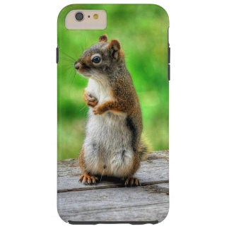 Young Male Squirrel Standing Wildlife Photo Tough iPhone 6 Plus Case