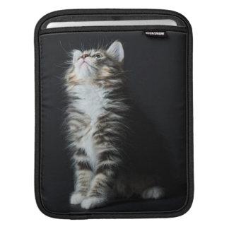 Young Male Tabby Cat iPad Sleeve