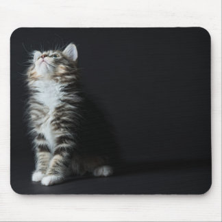 Young Male Tabby Cat Mouse Pad