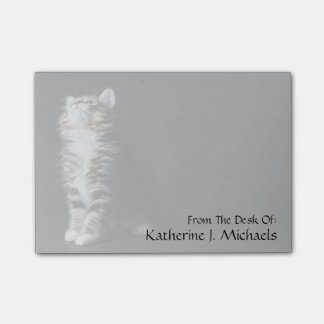 Young Male Tabby Cat Post-it Notes