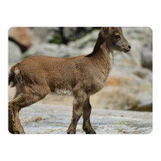 Young male wild goat, Iberian ibex, Spain Custom Invitations