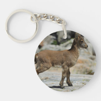 Young male wild goat, Iberian ibex, Spain Key Chains