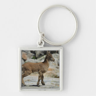Young male wild goat, Iberian ibex, Spain Keychains