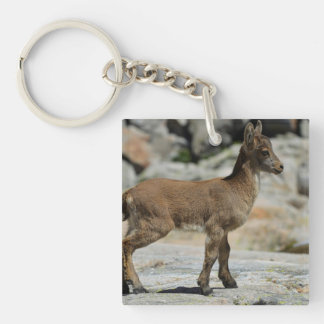Young male wild goat, Iberian ibex, Spain Acrylic Keychains