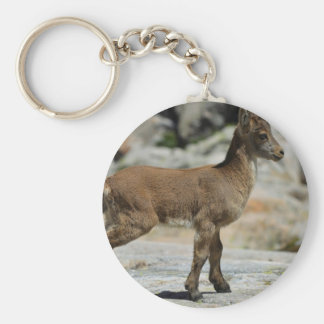 Young male wild goat, Iberian ibex, Spain Key Chain