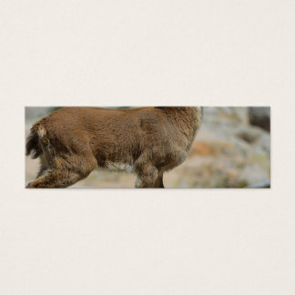 Young male wild goat, Iberian ibex, Spain Mini Business Card