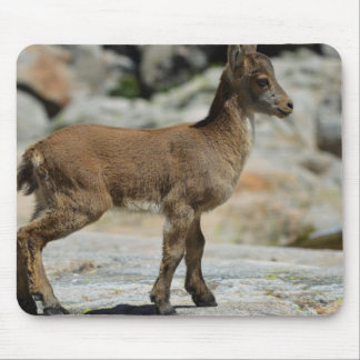Young male wild goat, Iberian ibex, Spain Mouse Pad