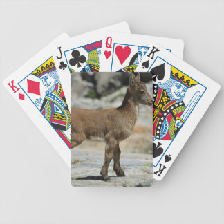 Young male wild goat, Iberian ibex, Spain Card Deck