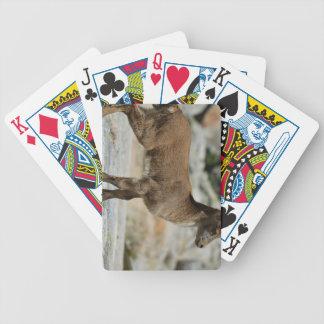 Young male wild goat, Iberian ibex, Spain Card Decks