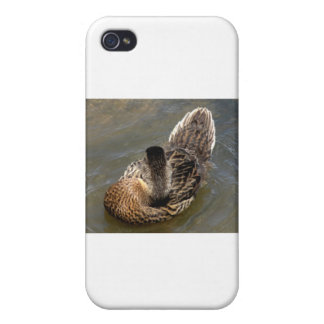 Young Mallard Duck iPhone 4 Cover