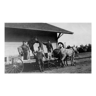 Young Men Posing on a Mule Wagon Poster