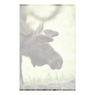 Young moose grazing in a field stationery