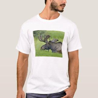 Young Moose in velvet T-Shirt