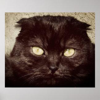 Young Munchkin Kitten Face Poster