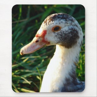 Young Muscovy Hen Duck mousepad