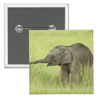 Young one of Indian / Asian Elephant,Corbett Button