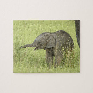 Young one of Indian / Asian Elephant,Corbett Puzzle