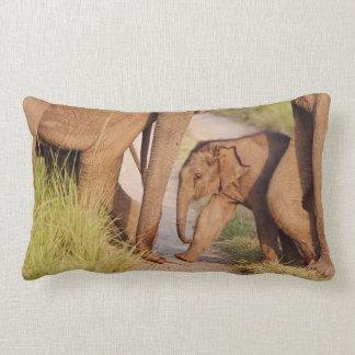 Young one of Indian Asian Elephant Lumbar Pillow