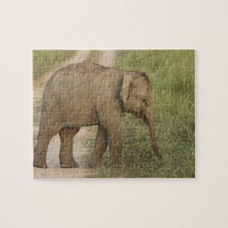 Young one of Indian / Asian Elephant on the Jigsaw Puzzle