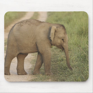 Young one of Indian / Asian Elephant on the Mouse Pad