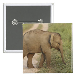 Young one of Indian / Asian Elephant on the Pinback Button