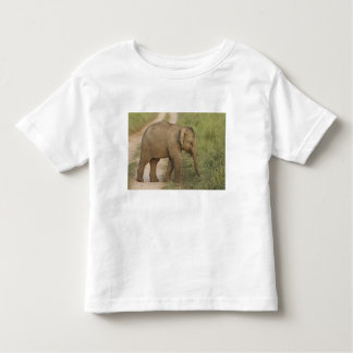 Young one of Indian / Asian Elephant on the Shirt