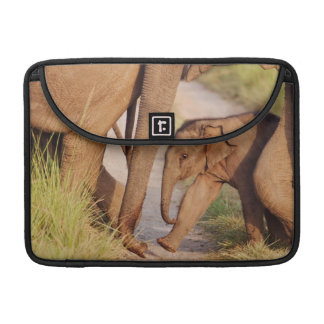 Young one of Indian Asian Elephant Sleeve For MacBooks