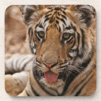 Young one of Royal Bengal Tiger Coaster