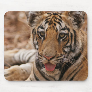 Young one of Royal Bengal Tiger Mouse Pad