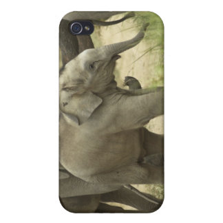 Young ones of Indian / Asian Elephant on the iPhone 4 Case
