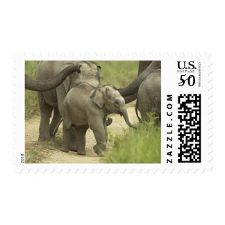 Young ones of Indian / Asian Elephant on the Postage