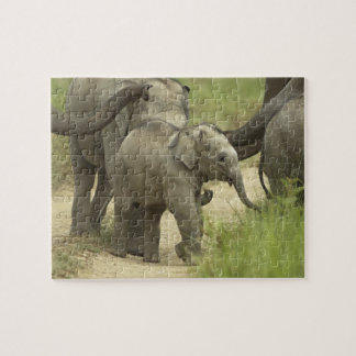 Young ones of Indian / Asian Elephant on the Puzzle
