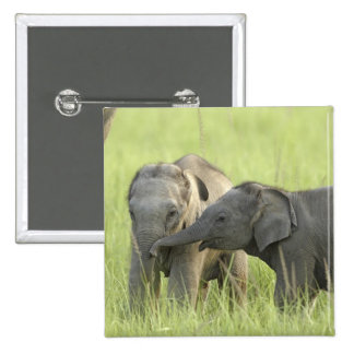 Young ones of Indian / Asian Elephant Pinback Button