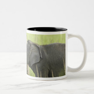 Young ones of Indian / Asian Elephant Two-Tone Coffee Mug