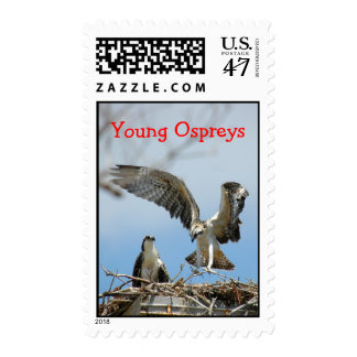 Young Ospreys Postage