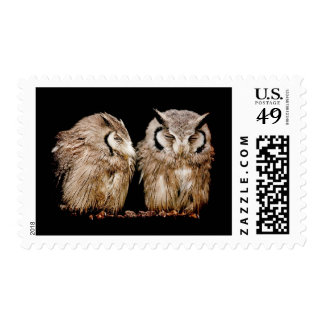 Young Owlets on Dark Background Postage