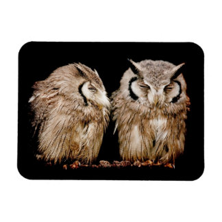 Young Owlets on Dark Background Rectangular Photo Magnet