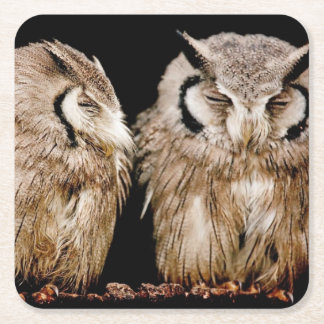Young Owlets on Dark Background Square Paper Coaster