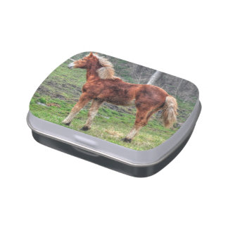 Young Palomino Horse Animal-lover's Photo Candy Tin