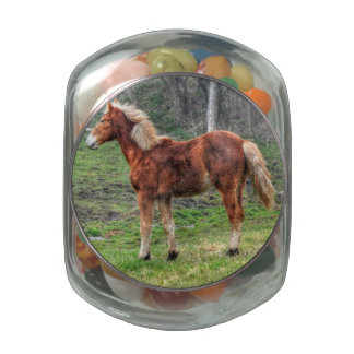 Young Palomino Horse Animal-lover's Photo Glass Candy Jar