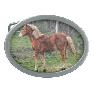 Young Palomino Horse with Winter Coat Oval Belt Buckle