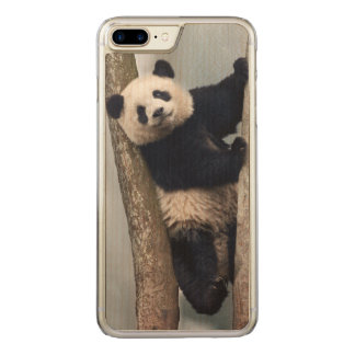Young Panda climbing a tree, China Carved iPhone 8 Plus/7 Plus Case