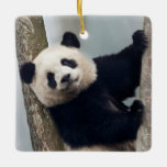 Young Panda climbing a tree, China Ceramic Ornament