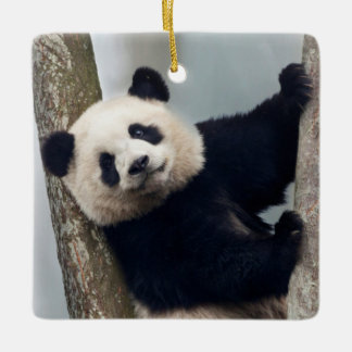 Young Panda climbing a tree, China Ceramic Ornament